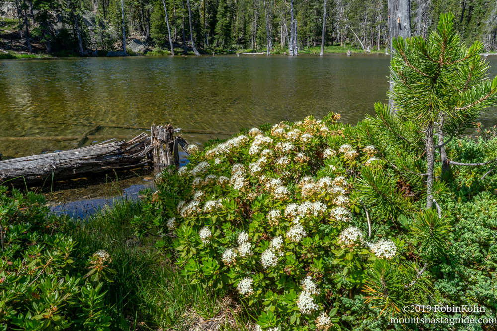 Caldwell Lakes, Mt. Shasta, wildflowers, Parks Creek Watershed